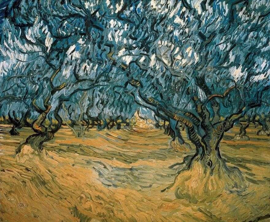 أشجار الزيتون   فنسنت فان جوخ