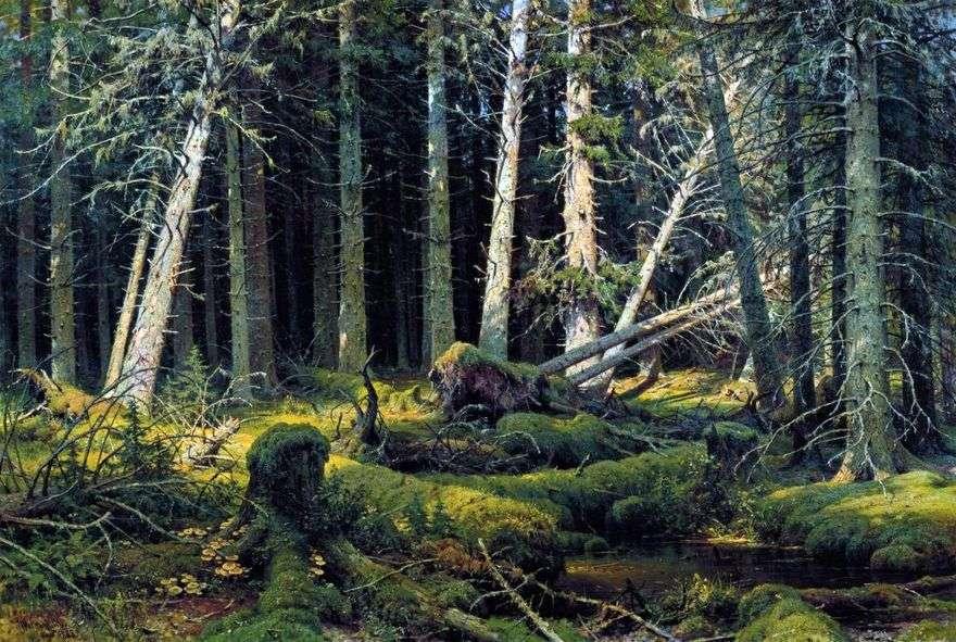 Burelom (غابة فولوغدا). الأشجار في مهب الريح   إيفان شيشكين