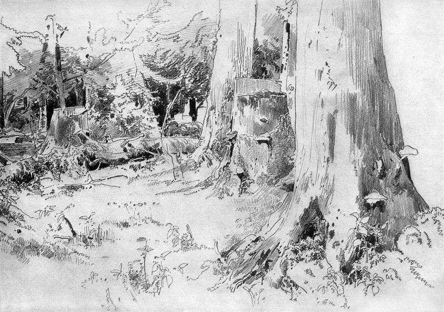 قطع الغابات   إيفان شيشكين