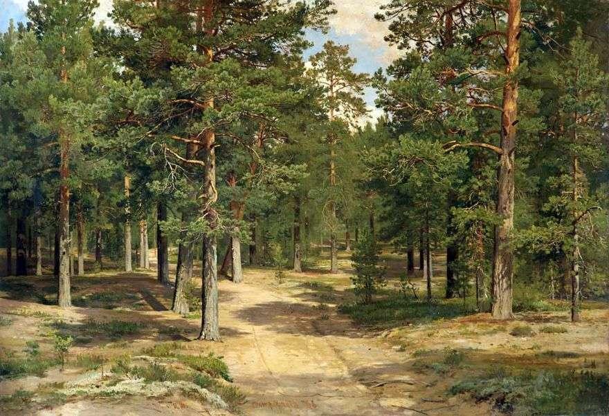 غابة Sestroretsky   إيفان شيشكين