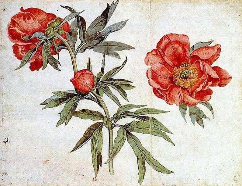 الرسم بالألوان المائية   مارتن Schongauer