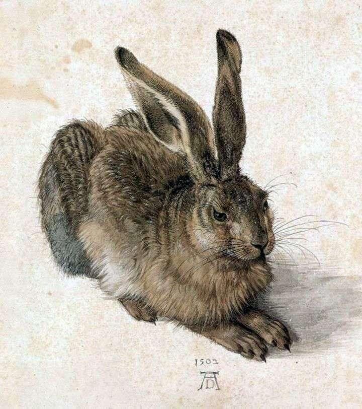 الأرنب الصغير   ألبريشت دورر