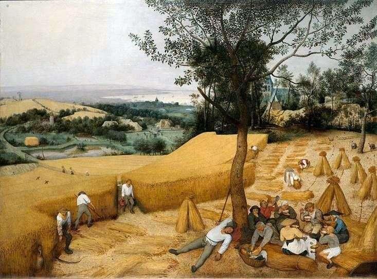 حصاد الصيف   بيتر Bruegel
